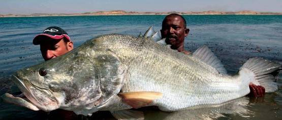 Fishing on lake Nasser — photo 01