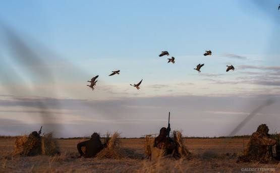 Hunting geese in Iceland — photo 01